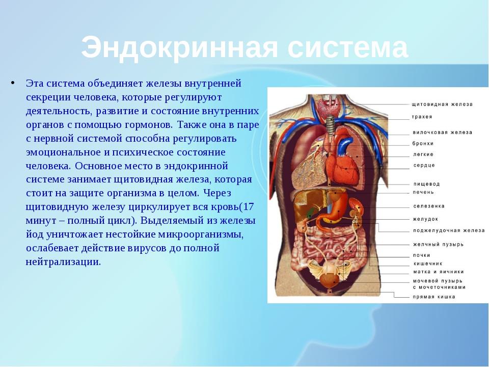 Эндокринная система Эта система объединяет железы внутренней секреции человек...