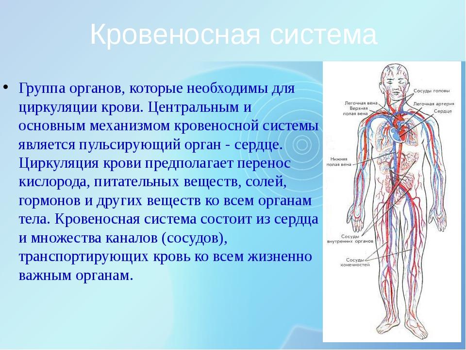 Кровеносная система Группа органов, которые необходимы для циркуляции крови....