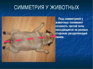 СИММЕТРИЯ У ЖИВОТНЫХ Под симметрией у животных понимают схожесть частей тела,