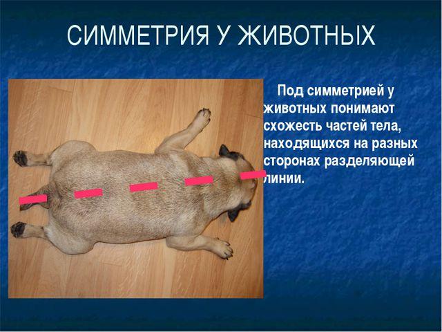 СИММЕТРИЯ У ЖИВОТНЫХ Под симметрией у животных понимают схожесть частей тела,...