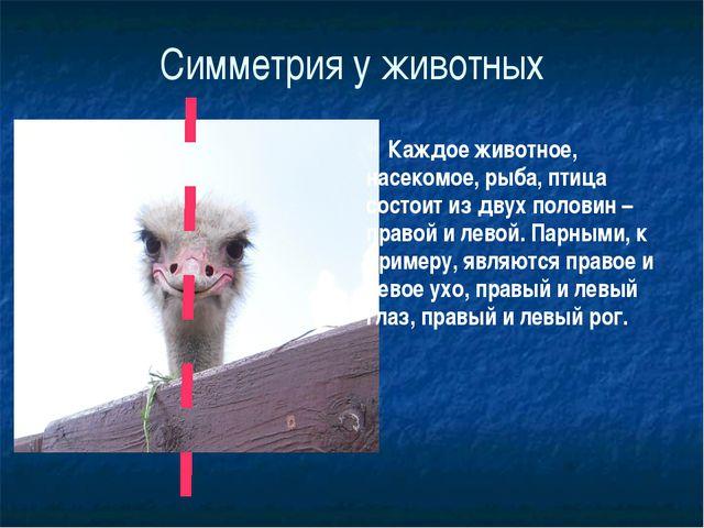 Симметрия у животных Каждое животное, насекомое, рыба, птица состоит из двух...