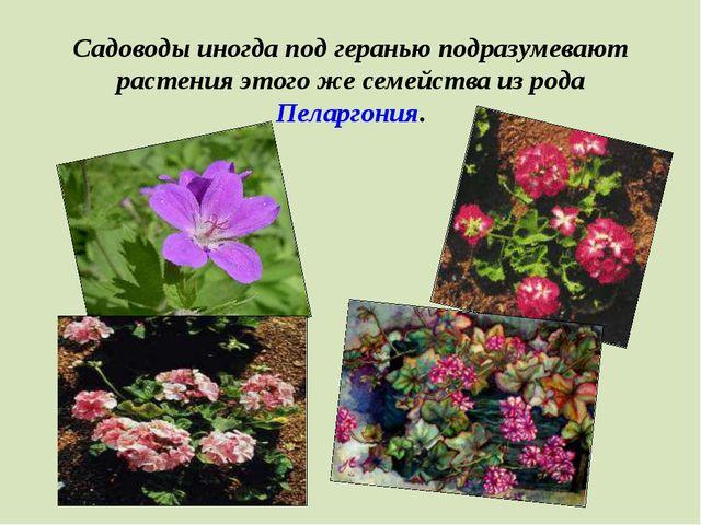 Садоводы иногда под геранью подразумевают растения этого же семейства из рода...