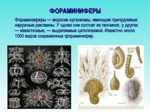 ФОРАМИНИФЕРЫ Фораминиферы — морские организмы, имеющие причудливые наружные р