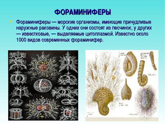 ФОРАМИНИФЕРЫ Фораминиферы — морские организмы, имеющие причудливые наружные р...