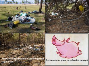 Уничтожение местной и дикой фауны туристами