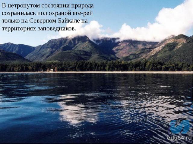 В нетронутом состоянии природа сохранилась под охраной егерей только на Сев...
