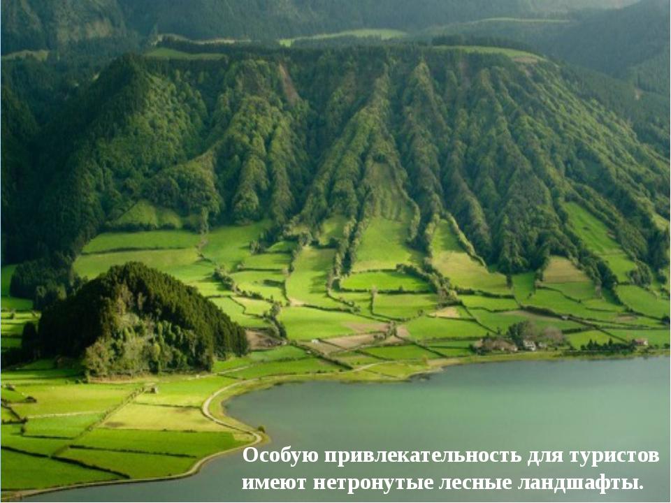Особую привлекательность для туристов имеют нетронутые лесные ландшафты.