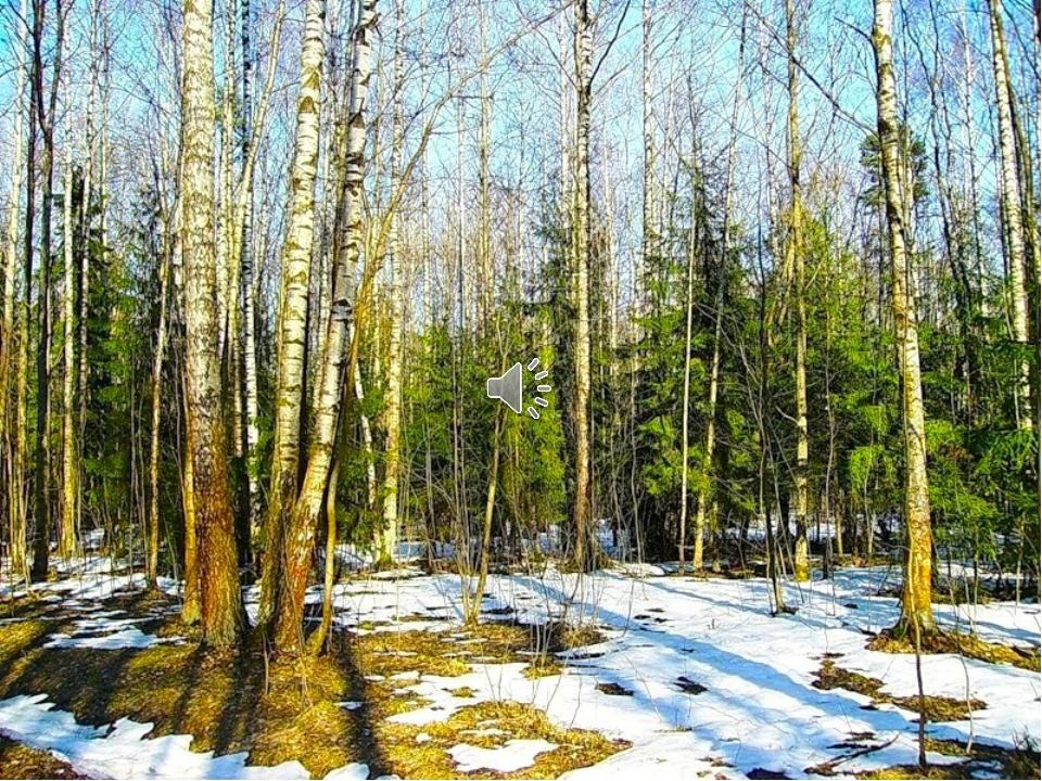 Весна картинки природа в лесу, лето