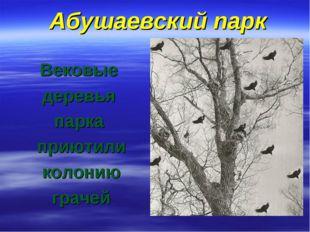 Абушаевский парк Вековые деревья парка приютили колонию грачей