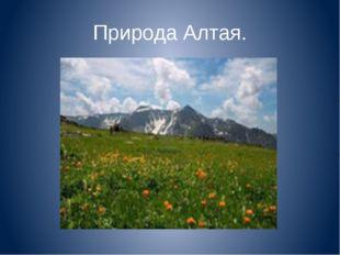 Природа Алтая.
