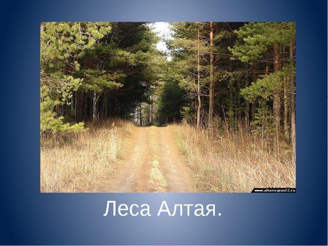 Леса Алтая.