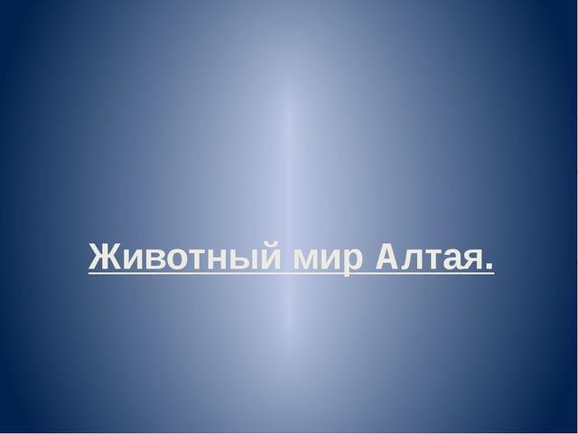 Животный мир Алтая.