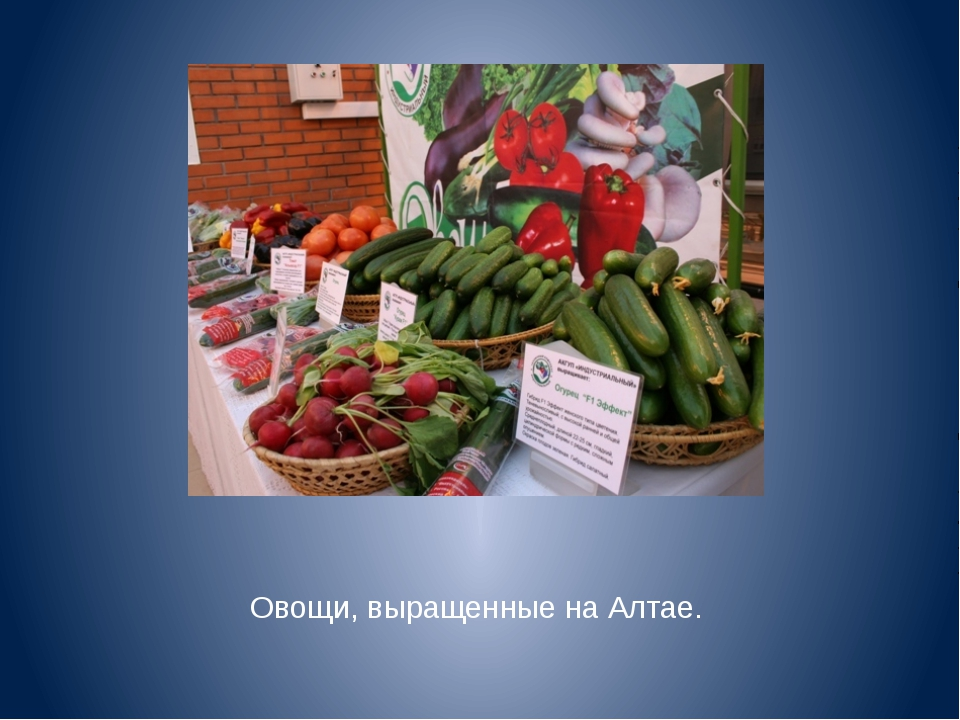 Овощи, выращенные на Алтае.