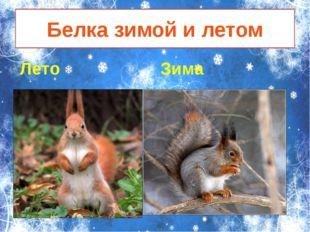 Белка зимой и летом Лето Зима