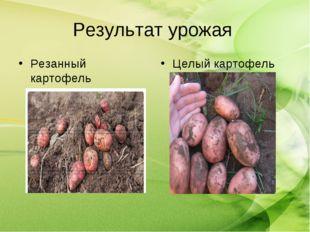 Результат урожая Целый картофель Резанный картофель