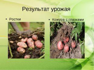 Результат урожая Ростки Кожура с глазками