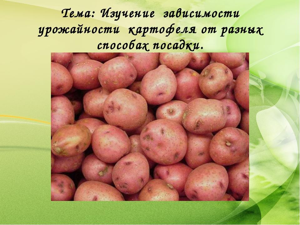 Тема: Изучение зависимости урожайности картофеля от разных способах посадки.