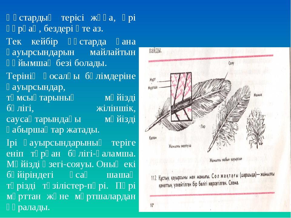 Құстардың терісі жұқа, әрі құрғақ, бездері өте аз. Тек кейбір құстарда ғана қ...