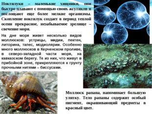 Ноктилуки – маленькие хищники, они быстро плавают с помощью своих жгутиков и