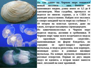 Не так давно на Черном море появился новый моллюск – мия. Внешне он напоминае
