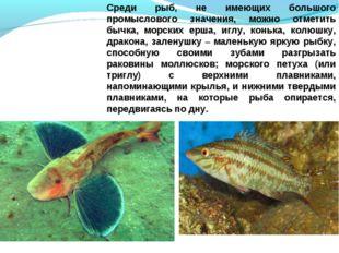 Среди рыб, не имеющих большого промыслового значения, можно отметить бычка, м