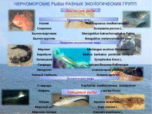 ЧЕРНОМОРСКИЕ РЫБЫ РАЗНЫХ ЭКОЛОГИЧЕСКИХ ГРУПП Костистые рыбы Хрящевые рыбы При