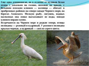 Еще одна длинноногая, но в отличие от куликов белая птица с хохолком на голов