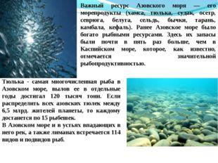 Важный ресурс Азовского моря — его морепродукты (хамса, тюлька, судак, осетр,