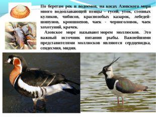 По берегам рек и водоемов, на косах Азовского моря много водоплавающей птицы
