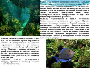 Водная среда является важнейшим источником мышьяка. Морские водоросли адсорби
