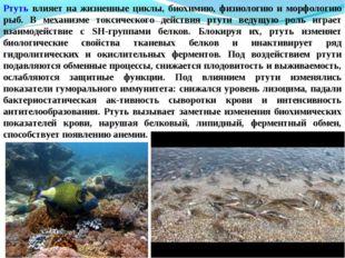 Ртуть влияет на жизненные циклы, биохимию, физиологию и морфологию рыб. В мех