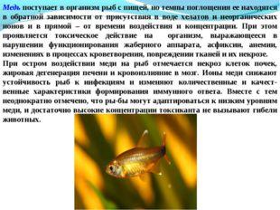 Медь поступает в организм рыб с пищей, но темпы поглощения ее находятся в обр