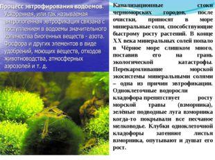 Канализационные стоки черноморских городов, после очистки, приносят в море ми