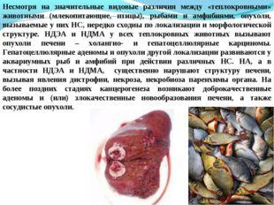 Несмотря на значительные видовые различия между «теплокровными» животными (мл