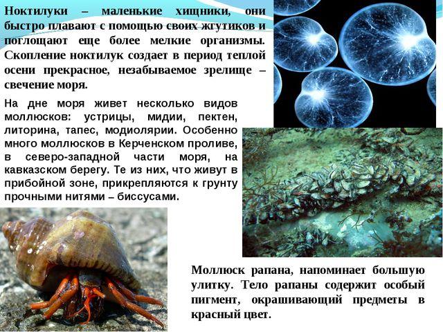 Ноктилуки – маленькие хищники, они быстро плавают с помощью своих жгутиков и...