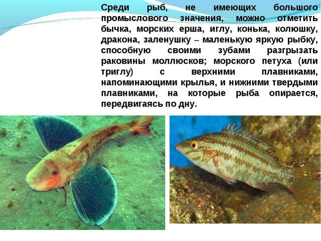 Среди рыб, не имеющих большого промыслового значения, можно отметить бычка, м...