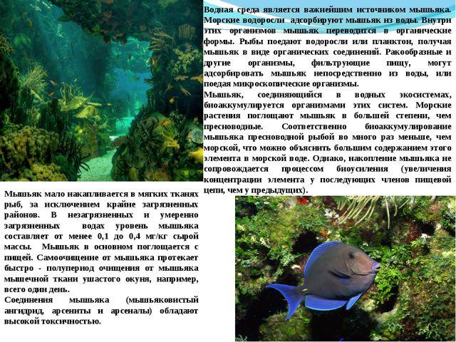 Водная среда является важнейшим источником мышьяка. Морские водоросли адсорби...