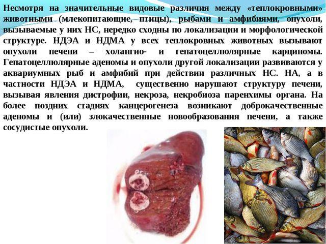 Несмотря на значительные видовые различия между «теплокровными» животными (мл...