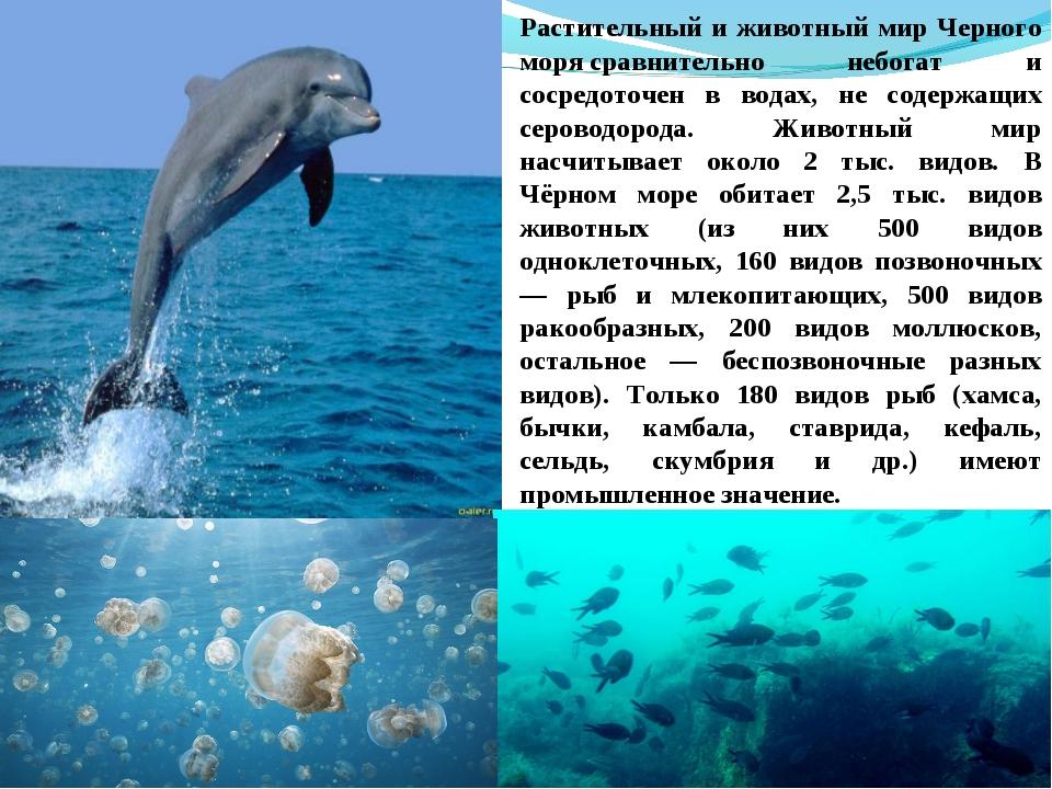 Растительный и животный мир Черного морясравнительно небогат и сосредоточен...