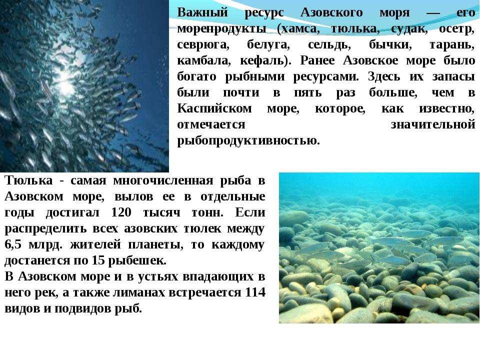 Важный ресурс Азовского моря — его морепродукты (хамса, тюлька, судак, осетр,...
