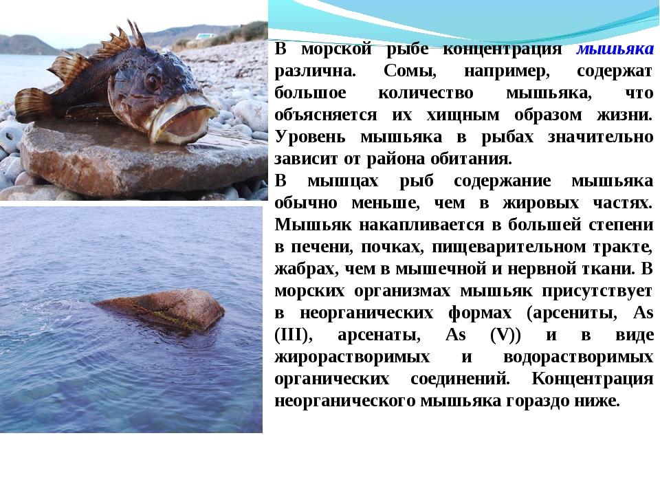 В морской рыбе концентрация мышьяка различна. Сомы, например, содержат большо...