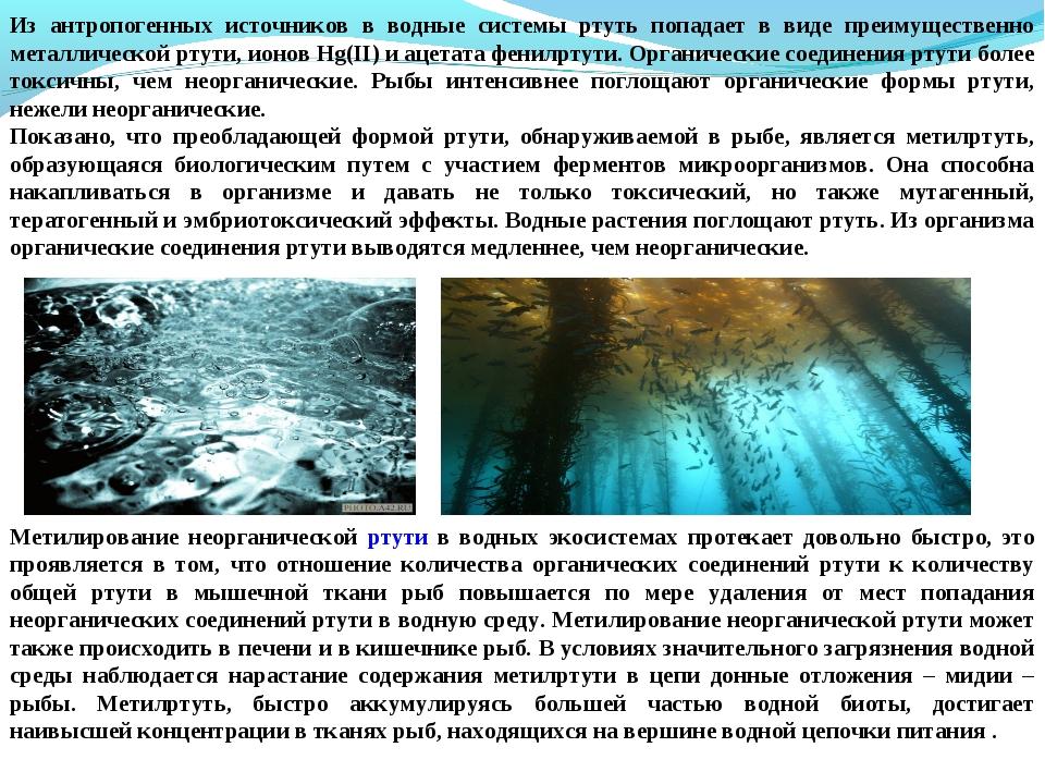 Из антропогенных источников в водные системы ртуть попадает в виде преимущест...