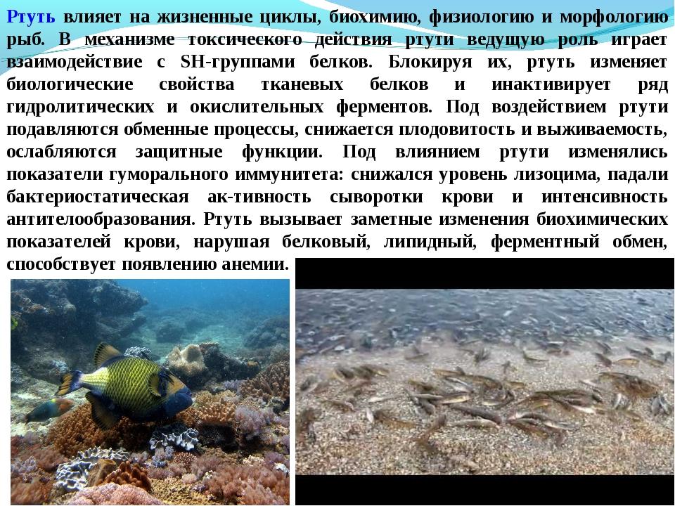 Ртуть влияет на жизненные циклы, биохимию, физиологию и морфологию рыб. В мех...