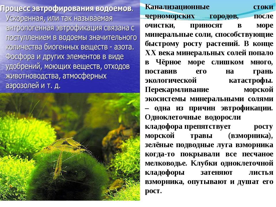 Канализационные стоки черноморских городов, после очистки, приносят в море ми...