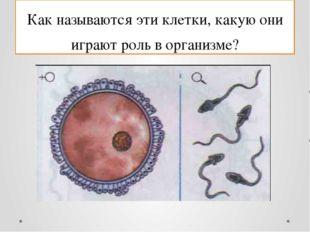 Как называются эти клетки, какую они играют роль в организме?