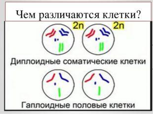 Чем различаются клетки?