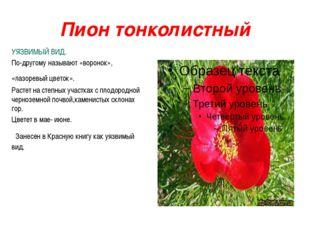 Пион тонколистный УЯЗВИМЫЙ ВИД. По-другому называют «воронок», «лазоревый цве