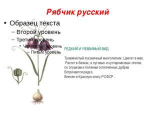 Рябчик русский РЕДКИЙ И УЯЗВИМЫЙ ВИД Травянистый луковичный многолетник. Цвет