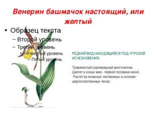 Венерин башмачок настоящий, или желтый РЕДКИЙ ВИД,НАХОДЯЩИЙСЯ ПОД УГРОЗОЙ ИСЧ