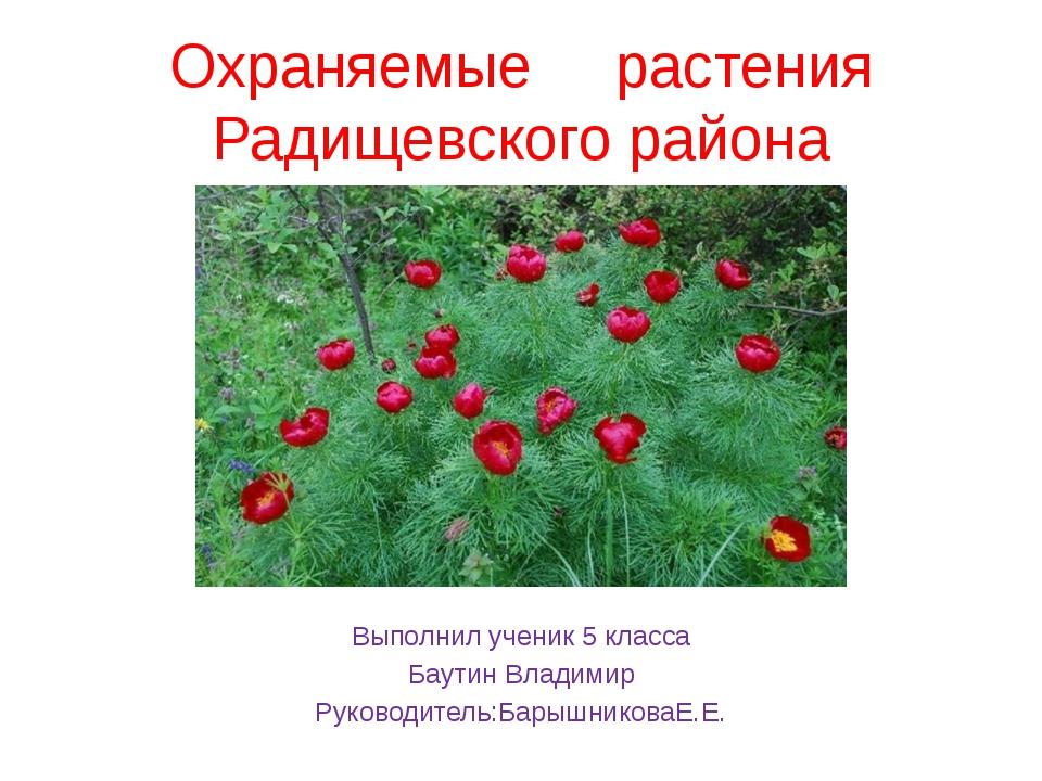 Охраняемые растения Радищевского района Ввввввввввввввввввввввввввввввввввввв...
